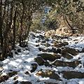写真: 100116-30大岳山・馬頭刈尾根 急登