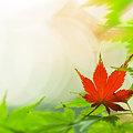 写真: 色づく葉