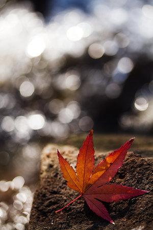 お正月の落ち葉