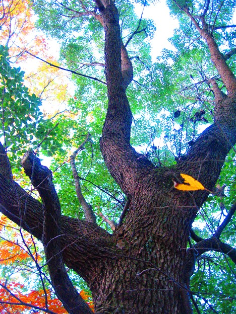 写真: 晩秋の森 in 瑠璃山