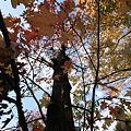 Photos: 秋のシャワー