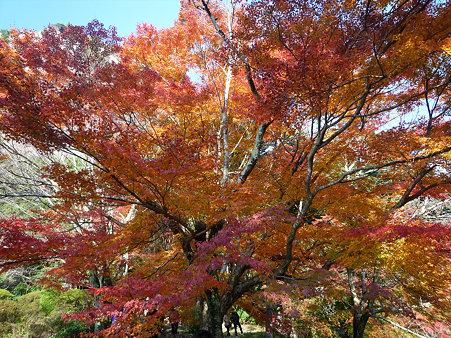 御船山楽園の紅葉(11)