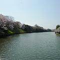 舞鶴公園の桜(22)