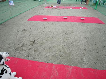 20101031 017