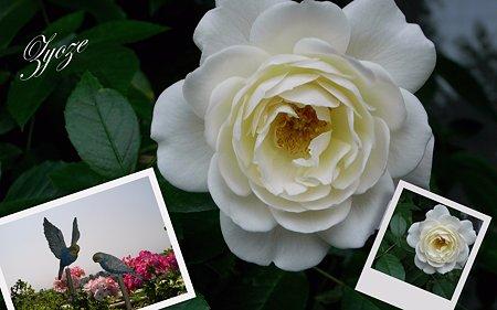 冬の白薔薇でコラージュ
