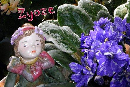 妖精とセントポーリア4