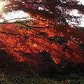 Photos: 夕日に赤