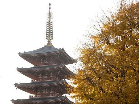 銀杏の浅草寺五重塔