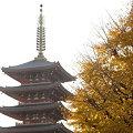 Photos: 銀杏の浅草寺五重塔