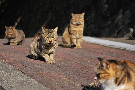 童謡の園・猫5