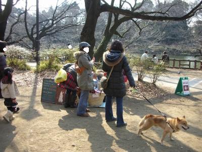 写真: 犬服屋さん 2