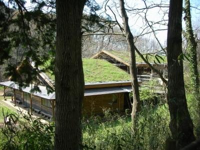 屋根に芝生が