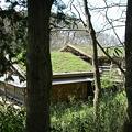 写真: 屋根に芝生が