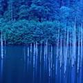 Photos: 湖の森2