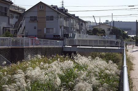 名瀬川のススキ 01