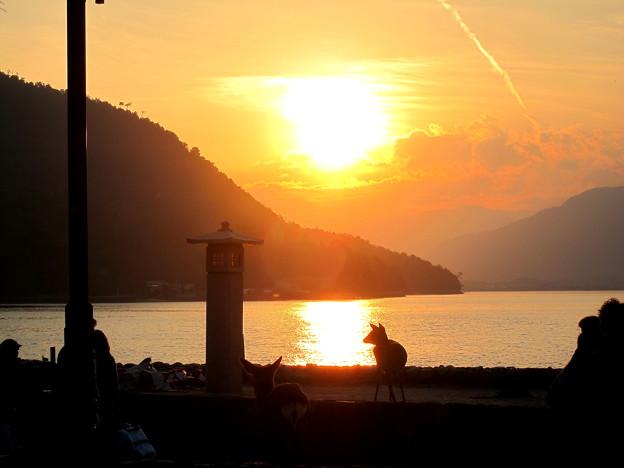紅葉の時期の宮島の夕日と鹿です。
