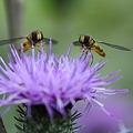 蜂さんと向き合う