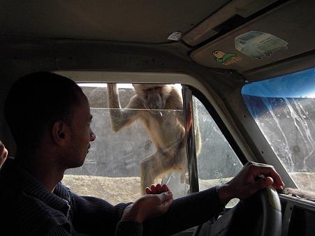 サルと運転手さん